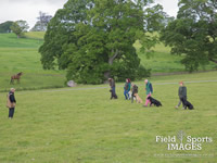Gun Dog Training @ Gwrych Bedw Gun Dogs